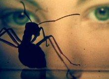 'Rợn tóc gáy' với loạt phim kinh dị về nhện và côn trùng siêu ám ảnh