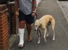 Mất hơn 8 triệu để đưa chó đi bác sỹ thú y, ai ngờ nó chỉ giả vờ què để bắt chước ông chủ bị gãy chân