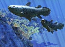 Hướng dẫn ứng dụng nuôi cá ảo trên màn hình PC, miễn phí 100%