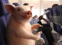 Tin được không, các nhà khoa học đang huấn luyện những chú lợn để chơi game giỏi hơn bạn