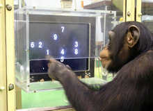 Một con khỉ được cấy chip não và đã có thể chơi game như người