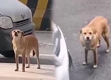 """Phòng khám bị chú chó đến """"mắng chửi"""" suốt 3 tháng vì lý do tế nhị này"""