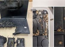 """Những hình ảnh kinh dị khiến game thủ rùng mình, có cả một """"nghĩa địa"""" gián ngay trong chiếc máy tính"""