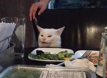 """Nguồn gốc những meme ghép chúa hề nổi tiếng MXH, từ """"cô gái chửi con mèo"""" đến """"người mẹ và đứa con"""""""