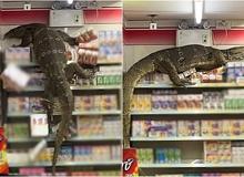 """Đói ăn, """"quái vật khổng lồ"""" đột nhập cửa hàng tiện lợi khiến CĐM sợ hãi, ví von như Godzilla"""