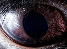 Giật mình trước vẻ đẹp kỳ lạ đến từ mắt của các loài động vật