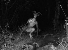 Những quái vật đáng sợ từng được đồn đại xuất hiện trong lịch sử loài người (P.2)