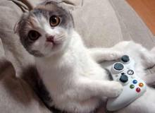 Ngộ nghĩnh với hình ảnh mèo bên máy chơi game