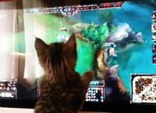 Khi mèo cũng đòi chơi Liên Minh Huyền Thoại