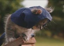 Ngộ nghĩnh mèo đội lốt sát thủ trong Assassin's Creed: Unity