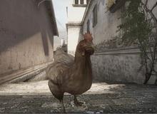 Chết vì gà trong Counter Strike