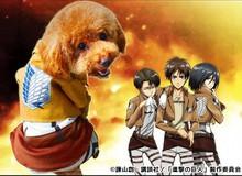 Ngộ nghĩnh cosplay Attack on Titan phong cách... cún cưng