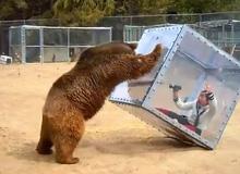 Trò chơi cảm giác mạnh: đùa với gấu