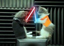 Gặp gỡ chú mèo Star Wars siêu dễ thương