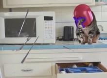Gặp gỡ chú mèo dị nhân siêu bá đạo