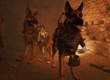 Game thủ Fallout 4 cuối cùng cũng được vào vai chó