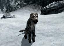 Chỉ vì muốn nuôi một con chó ảo trong game mà anh chàng này khốn khổ