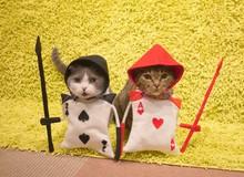 Đến thăm quán cafe mèo cosplay cực dễ thương tại Nhật Bản