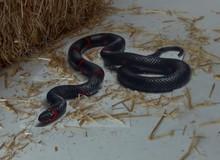 Bạn có chắc chắn rằng đây là một con rắn không?