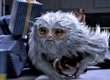 Thế giới phù thủy Harry Potter - Fantastic Beasts vượt mặt Doctor Strange thành phim ăn khách nhất tuần