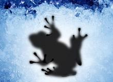 Sau nhiều năm im lặng, nhân vật bí ẩn nhất làng game thế giới - Ice Frog đã chịu lên tiếng