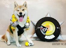 Chú chó này đã khiến các nhân vật Overwatch trông cực kỳ dễ thương