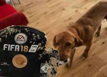 Chuyện kinh dị với game thủ: cún con cắn nát đĩa game bạc triệu