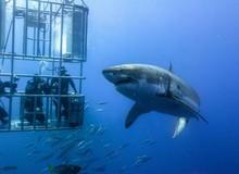 Sự cố đứt cáp quang biển Liên Á (IA) phải đến ngày 25/02 mới được khắc phục