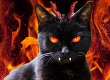 Chùm ảnh chứng minh loài mèo chính là hiện thân của... quỷ dữ!