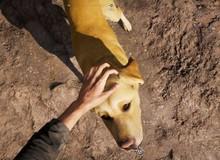 Chỉ bổ sung một tính năng nhỏ nhưng Far Cry 5 đã trở thành tựa game tuyệt vời nhất thế giới với hội yêu chó