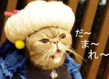 Ấn tượng với 8 ý tưởng cosplay boss mèo thành các nhân vật truyện tranh siêu hot