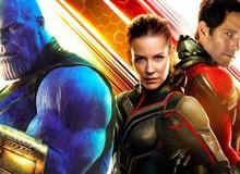 Sau Avengers: Infinity War, fan mong đợi gì từ 'Người Kiến Và Chiến Binh Ong'?