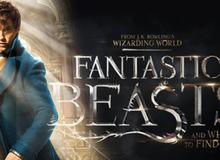Tin vui cho các fan Harry Potter: Bộ phim Fantastic Beasts sẽ có phần 3