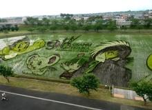 [Vui] Chỉ có tại Nhật Bản, người ta mới có thể vẽ tranh ngay trên ruộng lúa!
