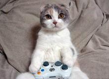 Mèo nhà người ta, vừa có iPhone X vừa biết chơi điện tử thế này thì đỡ sao?