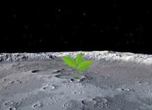 Lần đầu tiên trong lịch sử, hạt giống Trung Quốc trồng trên Mặt trăng đã nảy mầm
