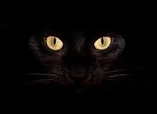 Không chỉ mèo, đây là 4 loài động vật cũng có thể nhìn thấy... ma quỷ
