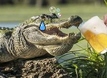Ép cá sấu nhậu, hai thanh niên phải nộp phạt 175 triệu đồng