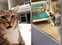 Chú mèo bị cho vào phòng biệt giam vì chuyên đi mở cửa giải cứu đồng đội chạy ra ngoài chơi