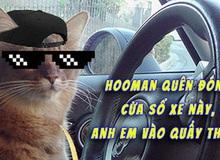 Phát hiện ô tô quên đóng cửa sổ, cả đàn mèo hoang rủ nhau chui vào 'quẩy tưng bừng'