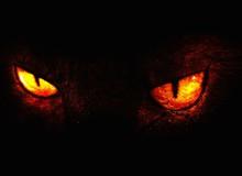 Khi hồn ma động vật quay về ám ảnh người sống