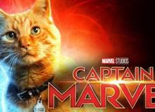 """Các fan xôn xao đề nghị làm hẳn phần phim riêng cho """"boss mèo"""" của Captain Marvel"""