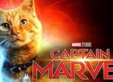 """""""Boss mèo"""" Goose chính là chìa khóa """"bí mật"""" giải cứu vũ trụ khỏi ác nhân Thanos?"""