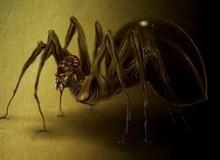 Siêu nhền nhện Anansi: Vị thần ranh ma trong thần thoại châu Phi