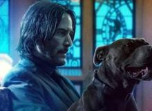 """Phản ứng đầu tiên về John Wick 3: Hấp dẫn đến từng phút, đặc biệt là đàn chó quá """"đỉnh"""""""