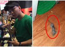 Bánh mỳ Pewpew bất ngờ bị tố có chuột chết trong cửa hàng và phản ứng bất ngờ của anh chàng streamer nổi tiếng