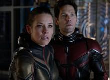 Ant-Man 3 không xuất hiện trong phase 4: Phải chăng Marvel đã hủy dự án Người Kiến?