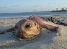 Sự tồn tại của những sinh vật đáng sợ và kì dị nhất thế giới (P.2)
