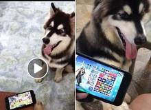 Võ Lâm Truyền Kỳ Mobile: Khi Boss học Sen tập làm game thủ