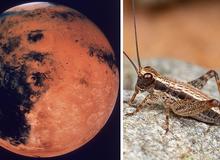 Đây sẽ là cách con người tồn tại trên sao Hỏa: ăn thịt nhân tạo, trồng rau trong hầm và... nhai côn trùng sống qua ngày